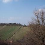 Вид на виноградник 2