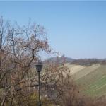 Вид на виноградник