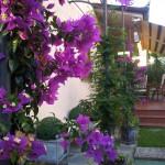 Цветы 4